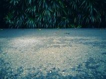 Grå konkret väg med nära närhet och fri bakgrund för för utrymme och grön växt Royaltyfria Bilder