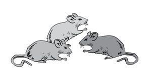 grå mus Fotografering för Bildbyråer