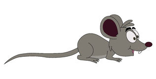 grå mus Arkivfoton