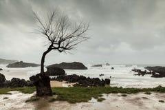 Grå och regnig dag i höst och storm i havet royaltyfri fotografi