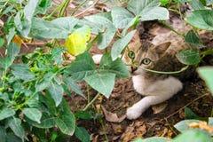 Grå och vit katt bak växter arkivfoton