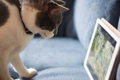 Grå och vit katt med iPad Royaltyfria Bilder