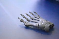 Grå prototyp av skelettet för mänsklig fot som skrivs ut på skrivaren 3d på mörk yttersida Arkivfoto