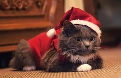 Grå rolig pott, iklädd gullig katt jultomtenkläderna horizont royaltyfri bild