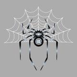 grå spindel Arkivfoto
