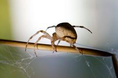 Grå spindel i luften Royaltyfri Bild