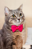 Grå stående för inhemsk katt Arkivbilder