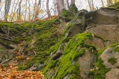 Grå sten med grön mossatexturbakgrund Royaltyfria Bilder
