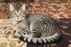 Grå strimmig kattkatt som lägger på matta Royaltyfri Foto