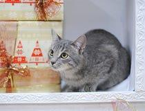 Grå strimmig kattkatt som ligger i den dekorativa spisen bland julgåvor Festlig och partiefterrätt Arkivbilder