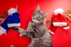 Grå strimmig kattkatt som väljer en vinterdräkt på röd bakgrund Tufft val mellan den röda och blåa hatten och halsduken arkivbilder