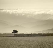 Grå sytle Paddy Rice Field Fotografering för Bildbyråer