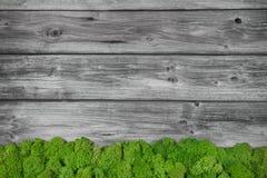 Grå träbakgrund med gröna mu Arkivfoton