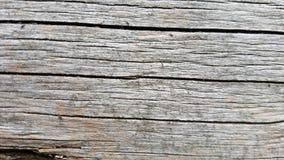 Grå wood texturbakgrund för makro Royaltyfria Foton