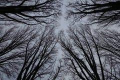 Gråa vinterträd som är svarta och arkivbild