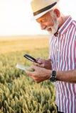 Gråhårigt undersökande vetefrö för agronom eller för bonde under förstoringsglaset i fältet och att söka efter bladlusen eller an arkivbild