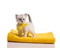 Lite kattunge på handduken Arkivbild