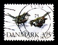 Gråsparvförbipasserandedomesticus, hotad dansk djurserie, circa 1994 Royaltyfri Foto