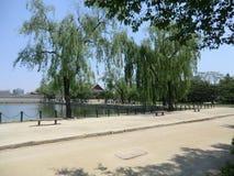 Gråta Willow Trees On The Edge av en sjö i Seoul, Sydkorea Fotografering för Bildbyråer