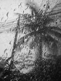 Gråton för regndroppefönsterrutaträd utomhus fotografering för bildbyråer