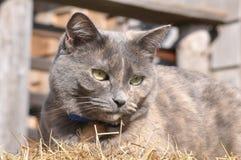 grått hö Royaltyfri Foto