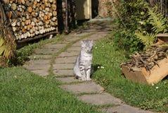 Grått kattsammanträde i trädgården royaltyfri fotografi