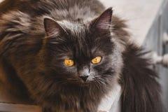 Grått kattsammanträde på fönsterbrädan royaltyfri foto