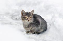 Grått kattungesammanträde i snön Royaltyfri Fotografi
