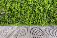 Grått träpryda och vägg av växten i trädgårds- garnering fritt arkivbild