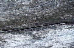 Grått trätexturmakrofoto Vit och grå wood bakgrund Royaltyfri Bild