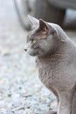 grått utomhus- för katt Arkivbilder