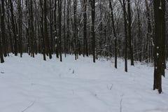 Grèves couvertes de neige de forêt d'hiver avec sa beauté et silence photo stock