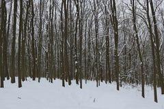 Grèves couvertes de neige de forêt d'hiver avec sa beauté et silence photographie stock libre de droits