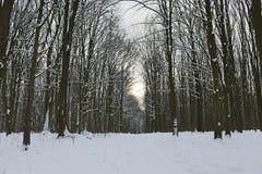 Grèves couvertes de neige de forêt d'hiver avec sa beauté et silence photos stock