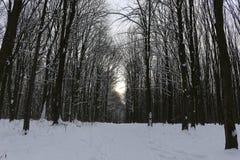 Grèves couvertes de neige de forêt d'hiver avec sa beauté et silence photos libres de droits