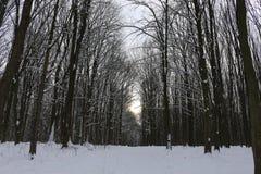 Grèves couvertes de neige de forêt d'hiver avec sa beauté et silence photo libre de droits