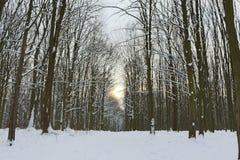 Grèves couvertes de neige de forêt d'hiver avec sa beauté et silence image stock