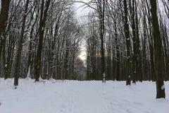 Grèves couvertes de neige de forêt d'hiver avec sa beauté et silence images libres de droits
