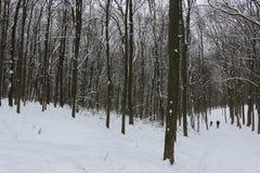 Grèves couvertes de neige de forêt d'hiver avec sa beauté et silence images stock