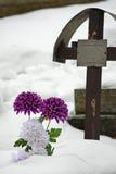 grób Obraz Stock
