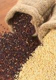 Grões cruas do Quinoa Imagens de Stock Royalty Free