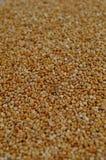 Grões cruas inteiras do Quinoa Fotos de Stock Royalty Free