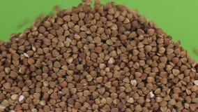 Grões de queda do trigo mourisco em uma pilha do trigo mourisco em uma tela verde video estoque