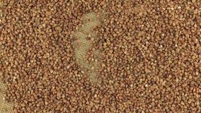 Grões de queda do trigo mourisco no círculo de giro do trigo mourisco que encontra-se no pano de saco vídeos de arquivo