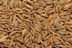 Grões de sementes da alcaravia. Fotos de Stock