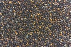 Grões dispersadas da pimenta Fotografia de Stock Royalty Free