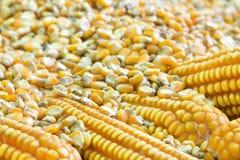 Grões do milho Foto de Stock Royalty Free