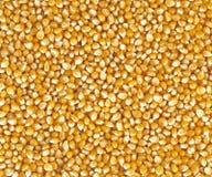Grões do milho Foto de Stock
