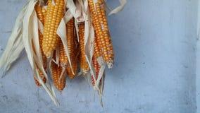 Grões do milho com o close up da gota de água Foto de Stock Royalty Free