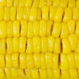 Grões do milho maduro Imagem de Stock